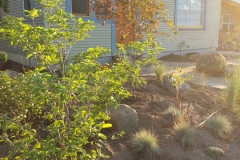 landscaping2648